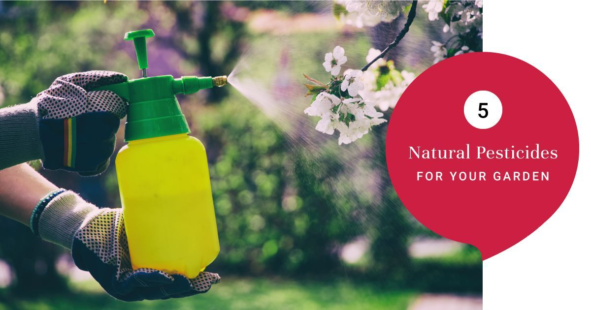 Natural Pesticides for Your Home Garden