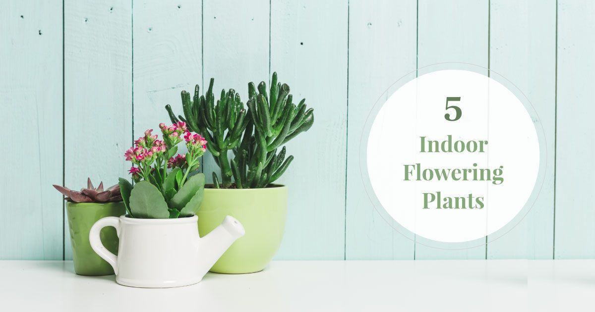 Best & Beautiful Indoor Flowering Plants