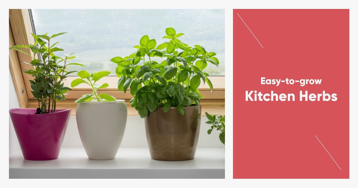 Why Buy Herbs When You Can Grow Them at Home?