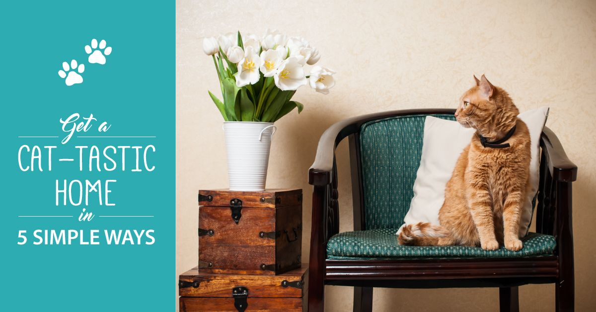 Get A Cat-tastic Home In 5 Simple Ways