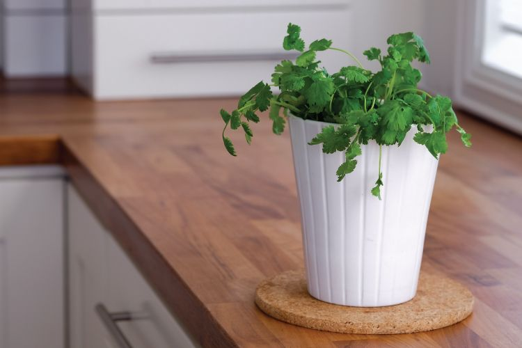 6 Common Indian Herbs That Are Easy To Grow In Your Kitchen