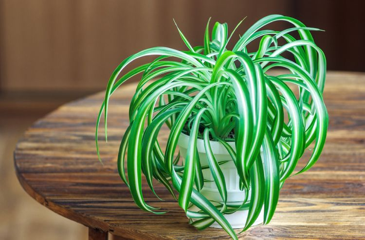 6 Plants That Can Grow Without Sunlight
