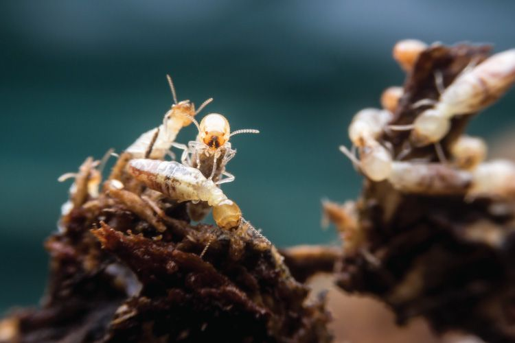 how to get rid of termites in soil