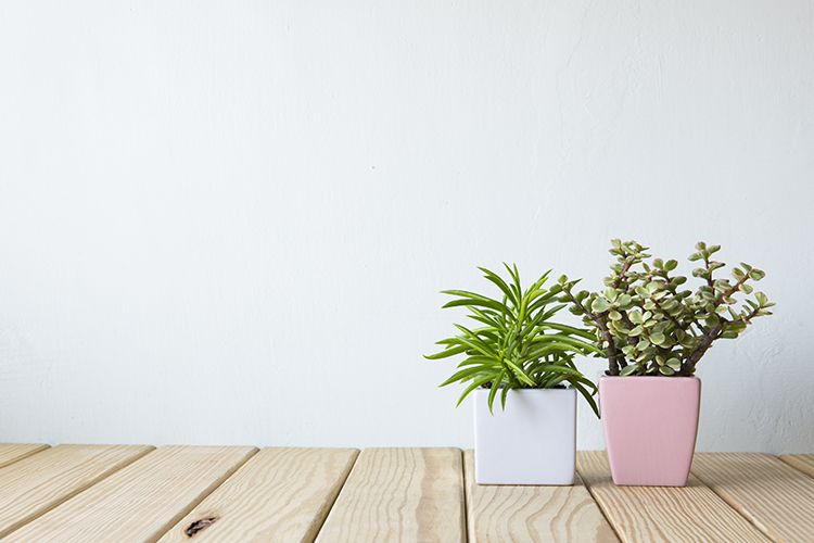 6 Indoor Plants That Can Grow Without Sunlight